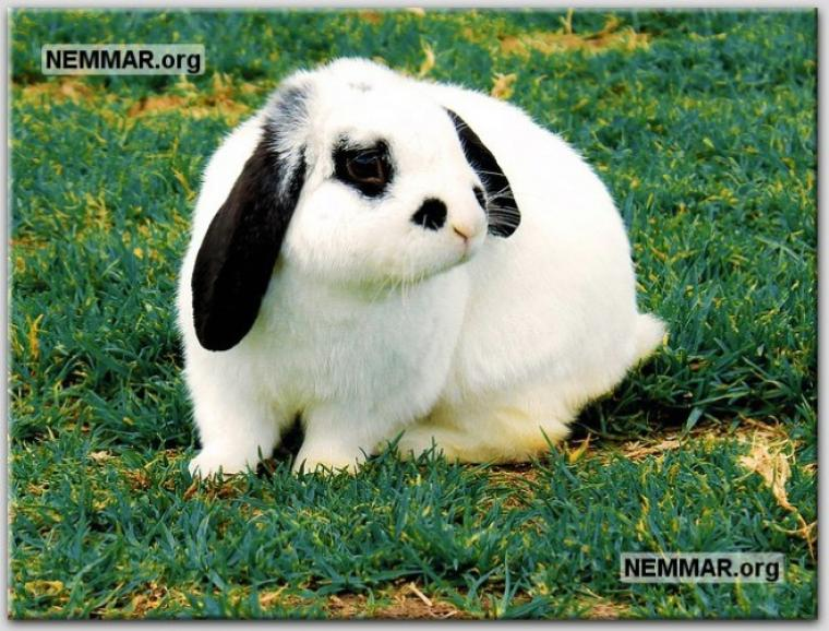 rabbit-photo-0011